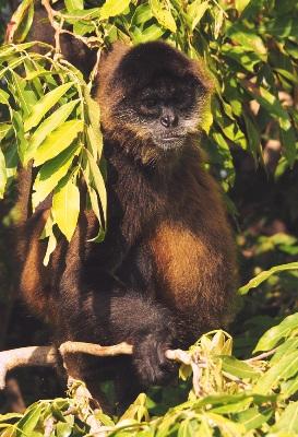 Affe in Nicaragua - Über Uns | QUERIDO MUNDO