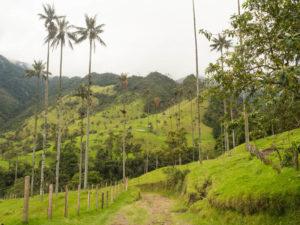 Gruppenreisen für Alleinreisende & Erlebnisreisen | Kolumbien Ablauf Wanderung durchs Cocoratal