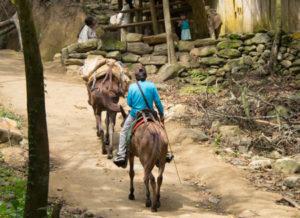Gruppenreisen für Alleinreisende & Erlebnisreisen | Optionale Aktivität Pferd mieten Tayrona Park