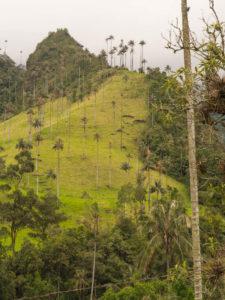Gruppenreisen für Alleinreisende & Erlebnisreisen I Kolumbien Ablauf Tag 7 spektakuläre Wanderung durch das Cocaratal