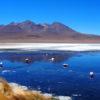 Gruppenreisen für Alleinreisende I Anden Ablauf Besuch einer Lagune mit Flamingos im Salar de Uyuni
