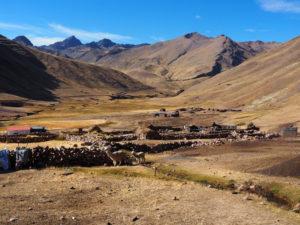 Gruppenreisen für Alleinreisende I Anden Alpakaherde in den Anden